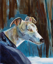 joey, a whippet